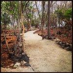 A few walking trails to the beach