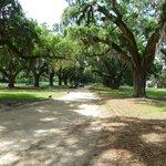 Oak lined entrance