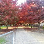 Walking in Beechworth