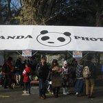 Dress up as a panda