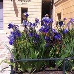 Irises in the Cour des Senteurs