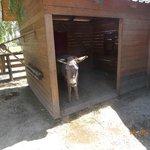 fattoria animali...