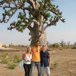 baobab et guide sénégalais