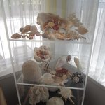 shell display in the lobby