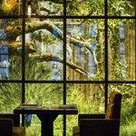Настоящий лес за стеклом.