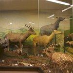 World Mammals Gallery (ground floor), free