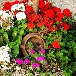 Sardunaki'nin keyifli bahçesinden bir bölüm