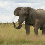 Elephant near camp