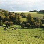 Foto de Wambrook Farm