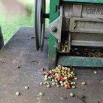 Coffee safari- mechanical bean separator at village small coffee farm