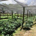 Coffee safari- National Coffee Research Institute