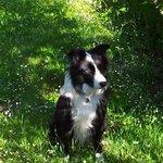 Choco, le chien de la maison