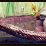 snake in the reptile house