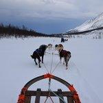 Dogsledding on a frozen lake