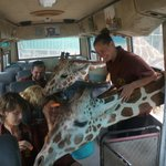 The safari experience
