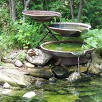 Fountain attracts many species of bird