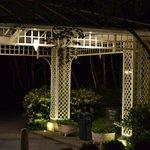 The Main Canopy
