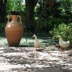 06 Quack and Quack