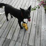 Chanel, der Haushund