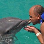 nado com golfinhos