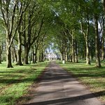 Tree tunnel drive to main entrance - spectacular