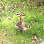 Baby rabbit right outisde our kitchen window!