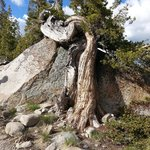 Great tree growing against the granite