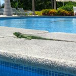 the iguanas visit you at the pool :)