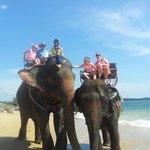 Elephant trek and bathing, organised thru Ramada.
