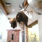 The resturant has a lot of cool taxidermy