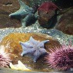 Interesting star fish