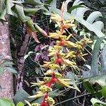 More Tropical Rain Forrest Flora