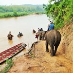 Elephant Village Sanctuary Day Trips