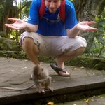 Monkey Forest!