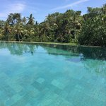 Infinity-style pool overlooking rice fields and over to the trees