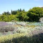 Il piccolo orto di erbe aromatiche