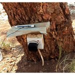 You can get electricity, from a tree (!), in Africa
