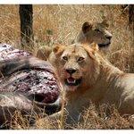 Serengeti Buffet - with Duma Explorer