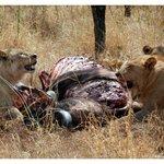 Serengeti Buffet - safari with Duma Explorer