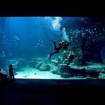 Le théâtre de l'Océan