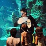 Animation plongée dans le bassin géant des requins