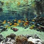 Le lagon de l'aquarium Mare Nostrum
