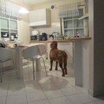 Die Küche in unserer Ferienwohnung,den Hund haben wir mitgebracht. ;)