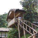 Buhoma Lodge cabin
