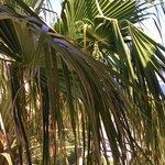 un palmier en guise de vue / peut mieux faire