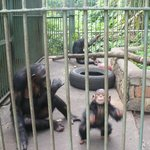 Monkeys in a dirty tiny cage which are starving