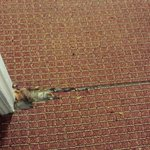 worst areas of the worn carpet