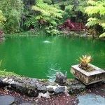 пруд в саду возле ресепшн Chalet Kiauea