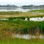 salt marshes full of wild life