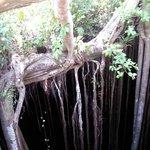 Racines tronc